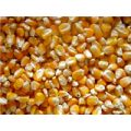 Corn (Mısır)