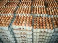 FARM FRESH WHITE AND BROWN CHICKEN EGGS
