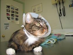 Sipariş Cerrahi ve Ortopedik Operasyonlar