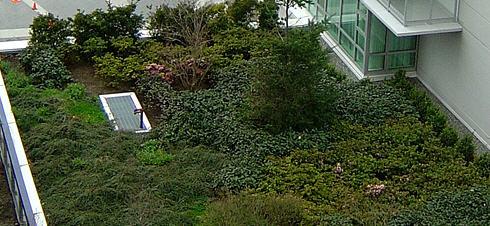 Sipariş Ev çatılarını yeşillendirme hizmeti
