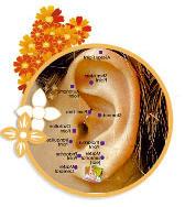 Sipariş Akupunktur tedavileri