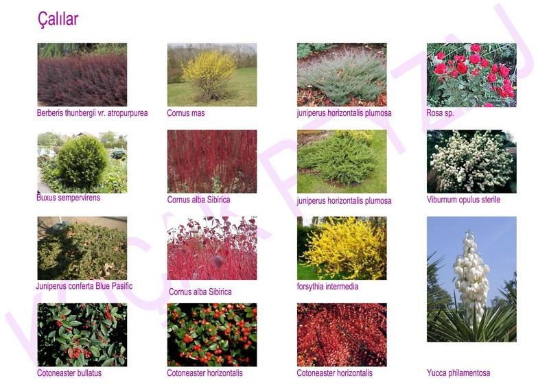 Sipariş Bitki türlerinin uygulamaları