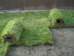 Hazır çim