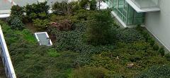 Ev çatılarını yeşillendirme hizmeti