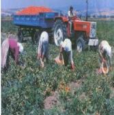 Yalçın Çapanik  İş ve Sosyal Güvenlik Danışmanlığı    6111 ile Yeniden Yeni Tarım SSK'sı