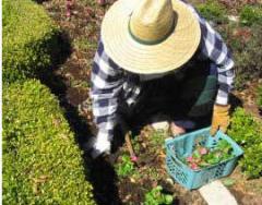 Bitki Besleme Bitkinin İhtiyacını Bilmekle Olabilir.