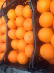 Срочно продаются Турецкие Апельсины .