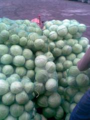 Срочно продается белая капуста из Турции.