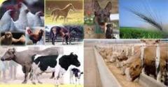 Hayvan Yem Katkı Maddeleri-Melas