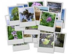 Fotoğrafların dijital hale getirilmesi