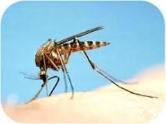 Sitelerde sivrisinek mücadelesi
