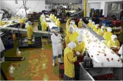 Gıda endüstride hijyen ve sanitasyon
