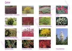 Bitki türlerinin uygulamaları