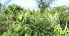 Diş mekan süs bitkileri